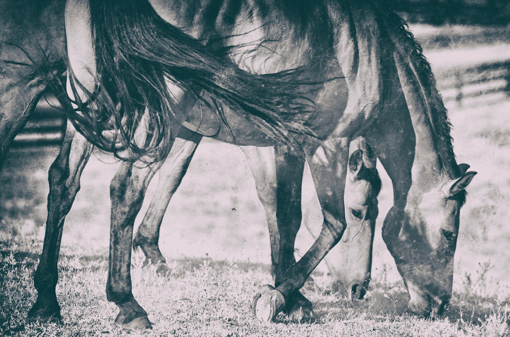 Middleburg Horses IMG_5216-2