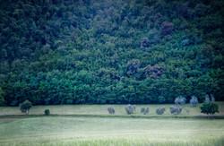 Chianti Hills 3645