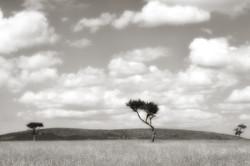 Kenya Tree 0415