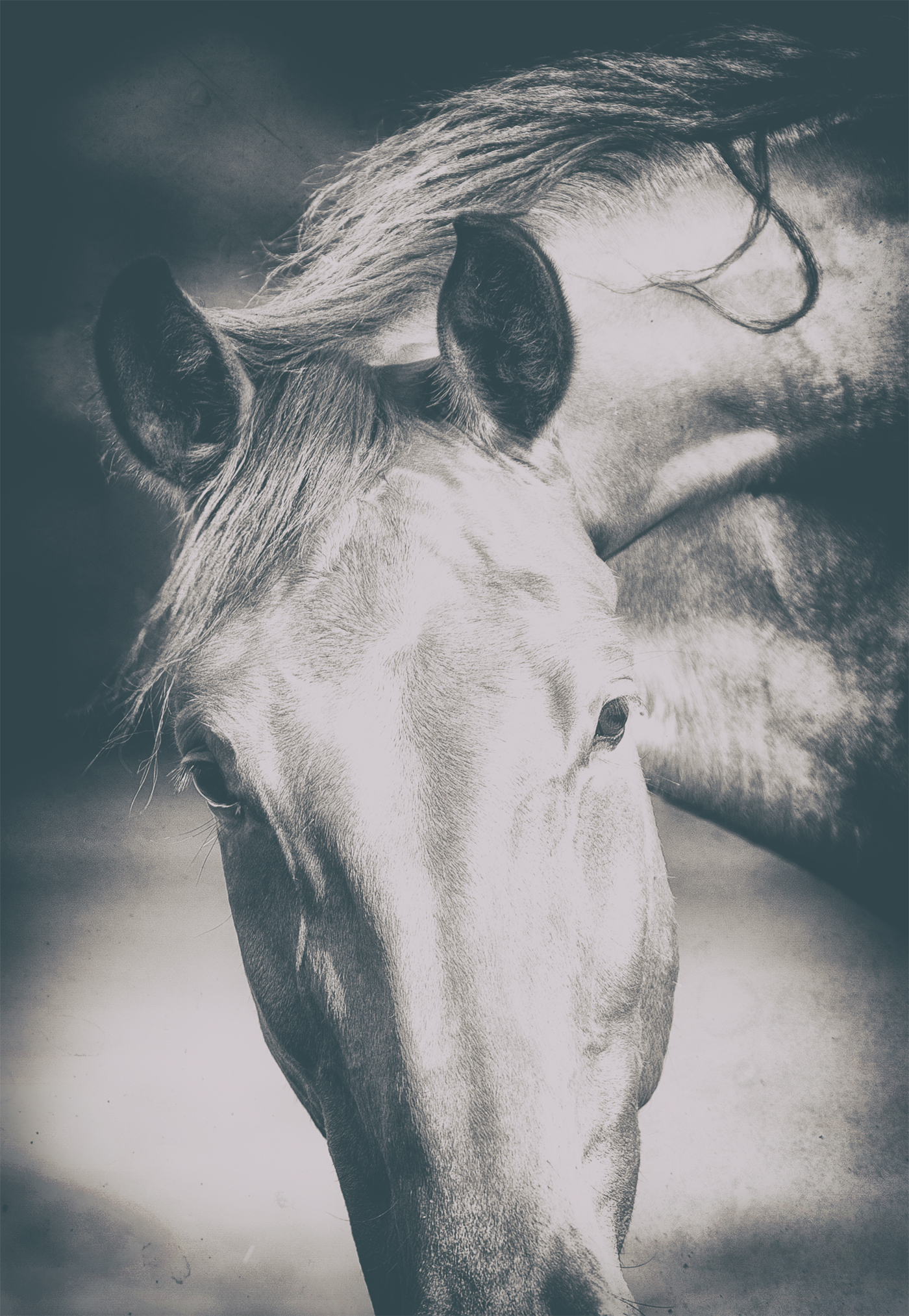 Middleburg Horse IMG_5205-1