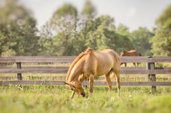 Middleburg Horses 5168 blur