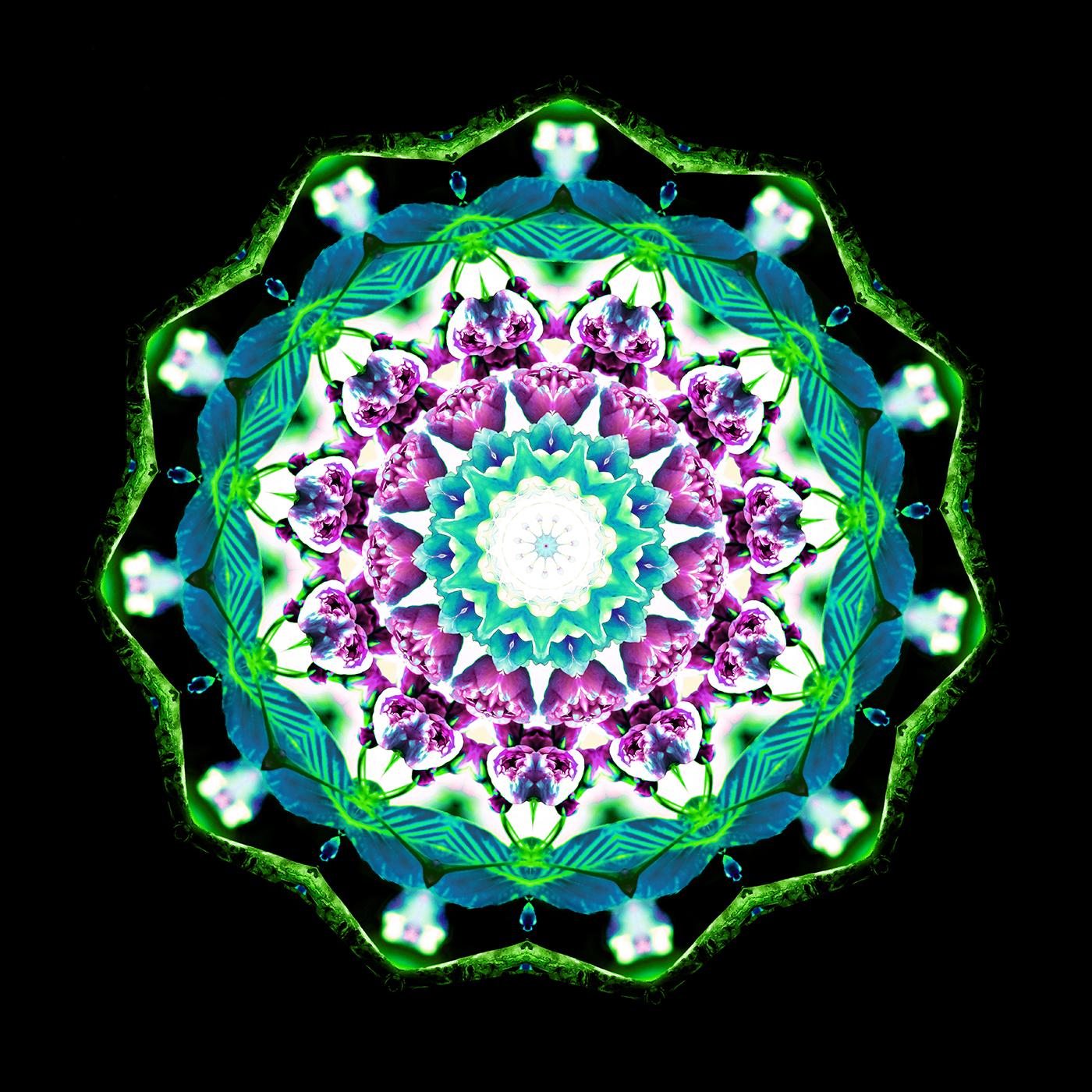 Cherry Blossom Kaleidoscope A-5