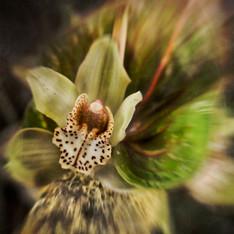 Floral 5872