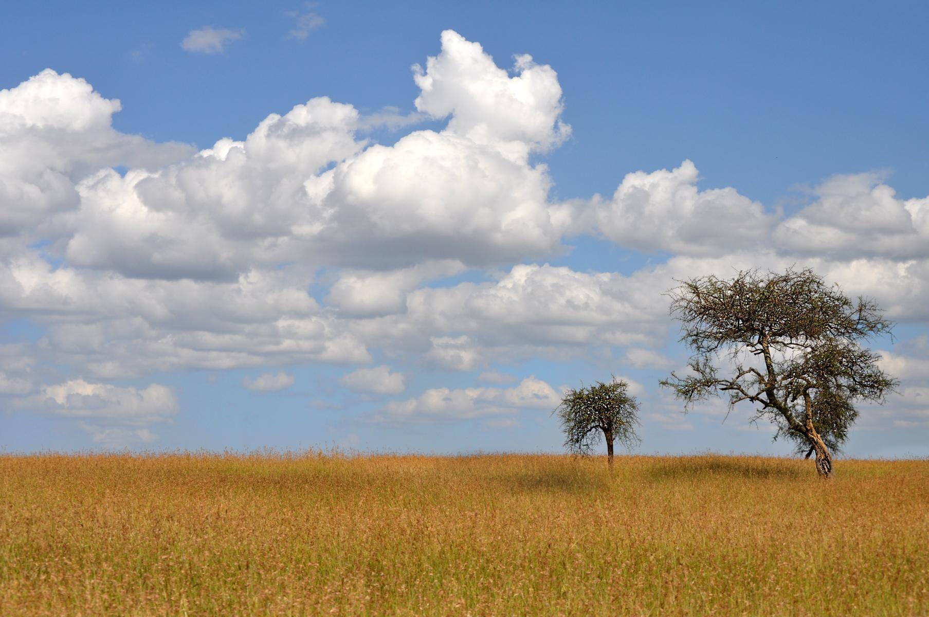 Kenya Tree 0417