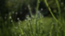 AdobeStock_318895157.jpg