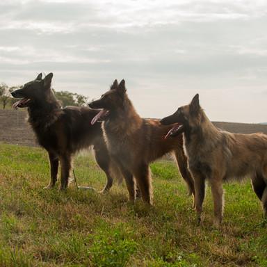 Argoyl, Turi und Sia