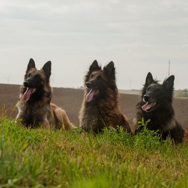 Sia, Turi und Argoyl