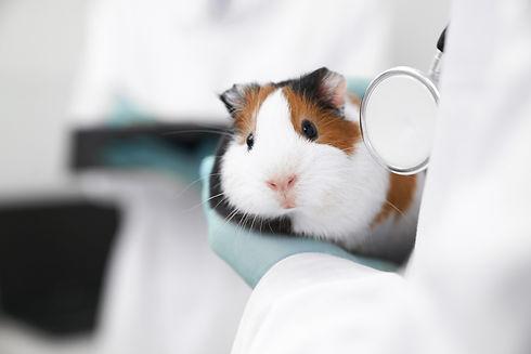 cute-hamster-muzzle-close-up.jpg