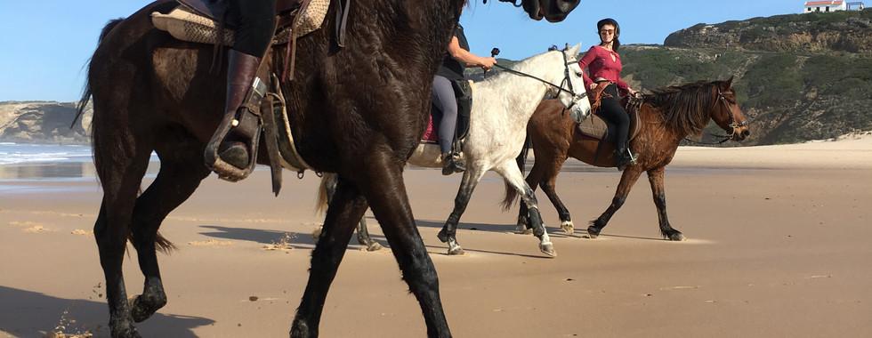 Escursioni a cavallo. Potrete fare corsi oppure fare delle belle cavalcate lungo le costiere e sulle spiagge