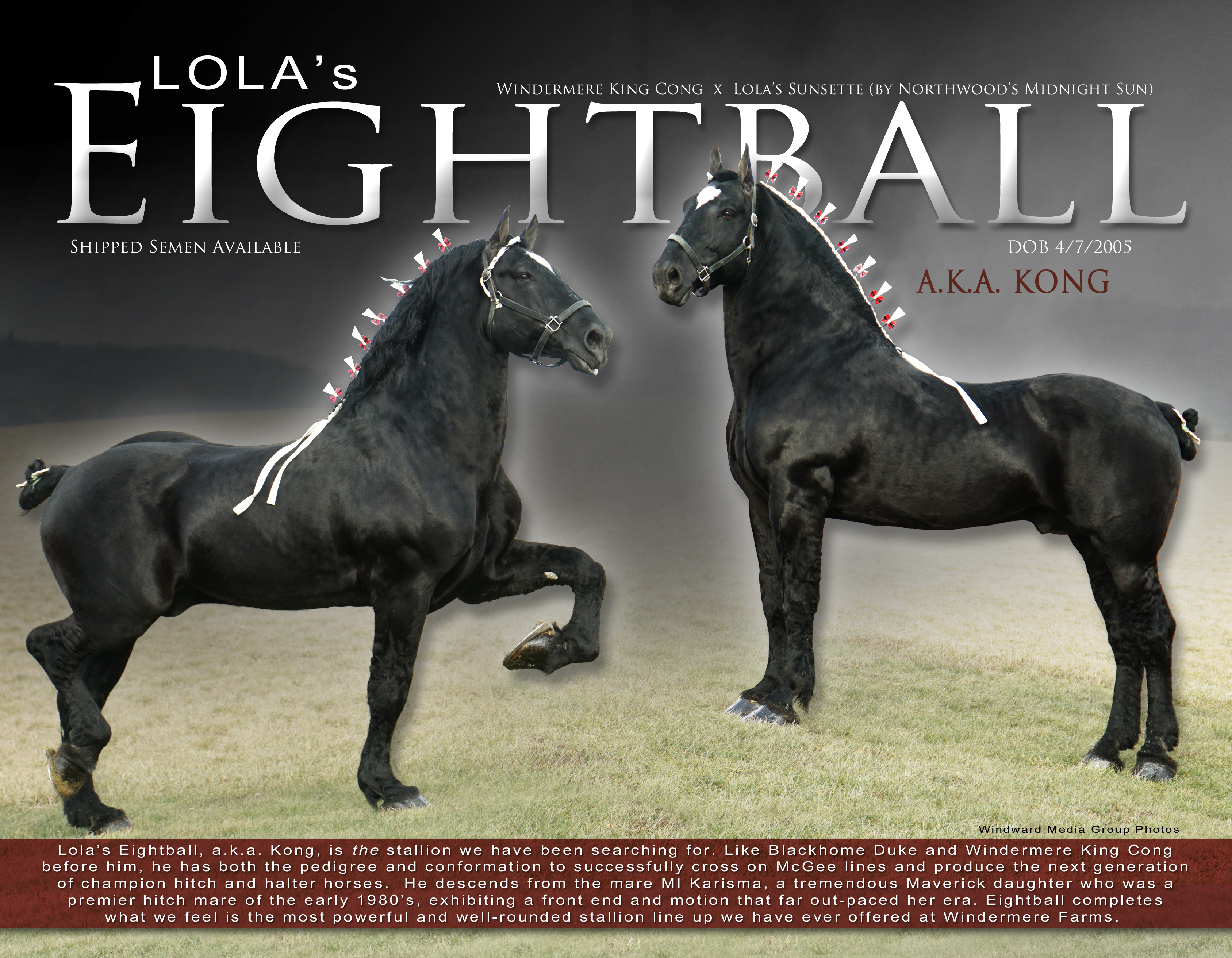 windermere farms stallion brochure 2020_