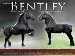 Bentley IMG_3479