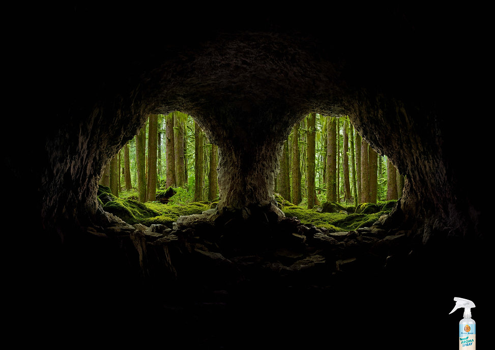 CAVES_forest_FA[1].jpg