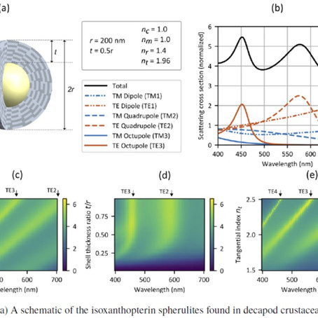 Measuring the optical properties of nanoscale biogenic spherulites. Check out our new paper!
