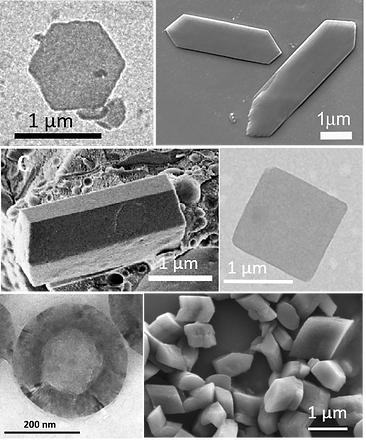 guanine crystals2.tif.png
