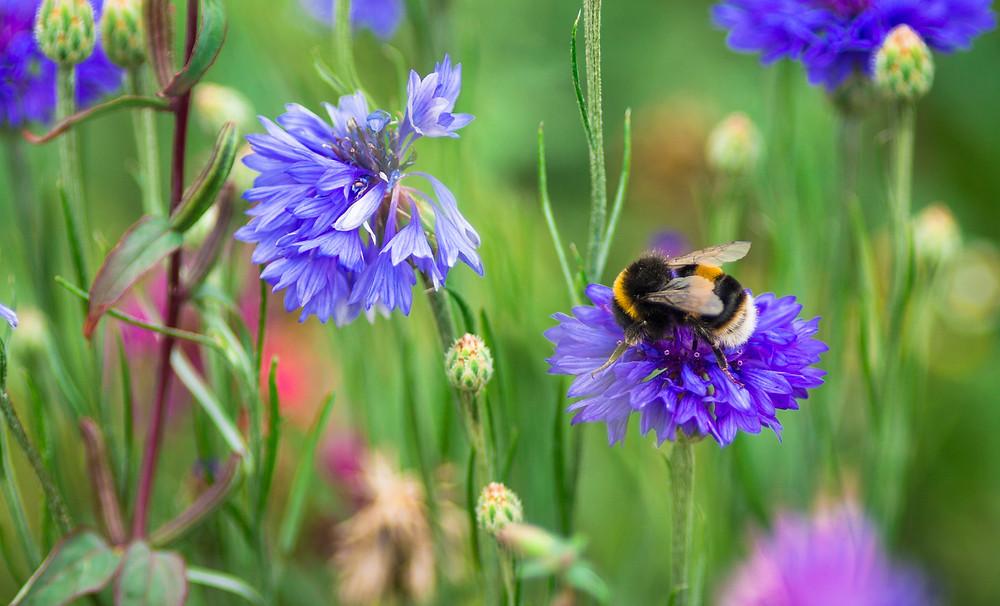 Somerset Garden Day, Somerset cool, Somerset blog, Somerset blogger, Paula Carnell