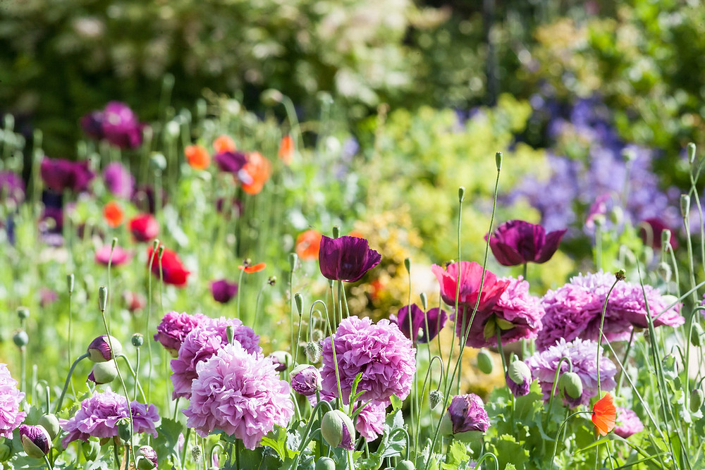 Somerset Garden Day, Somerset gardens, Somerset cool, Somerset blog, Celebrate Somerset Garden Day