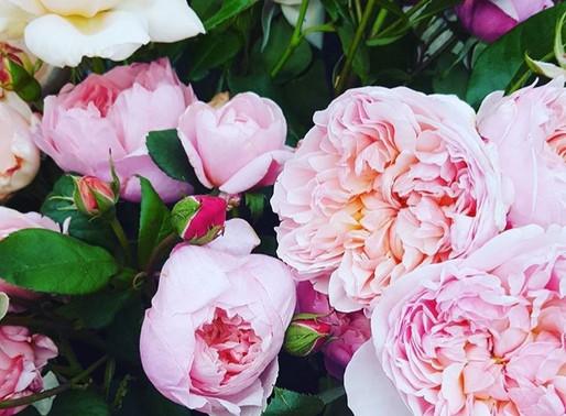Somerset flower power - Manor Farm Cottage Flowers