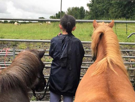 Somerset Equus - a community gem