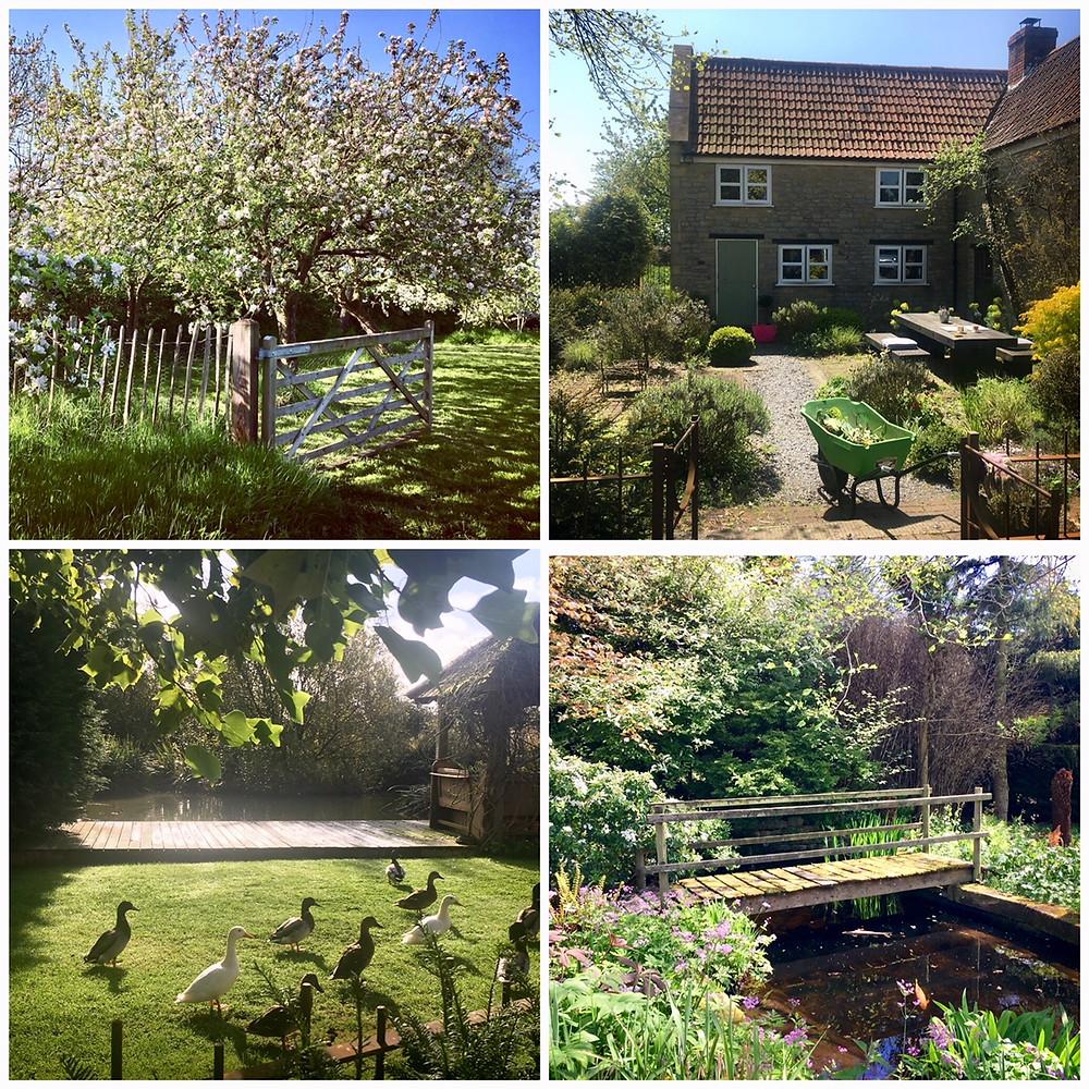 Somerset garden day, Somerset gardens, Somerset blog, Somerset cool