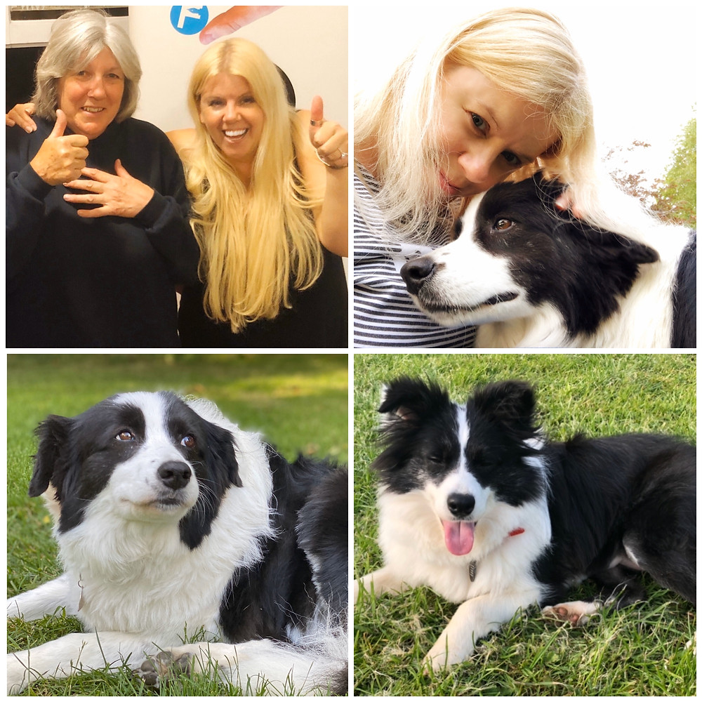 Somerset cool, Somerset and dorset animal rescue, Somerset blogger