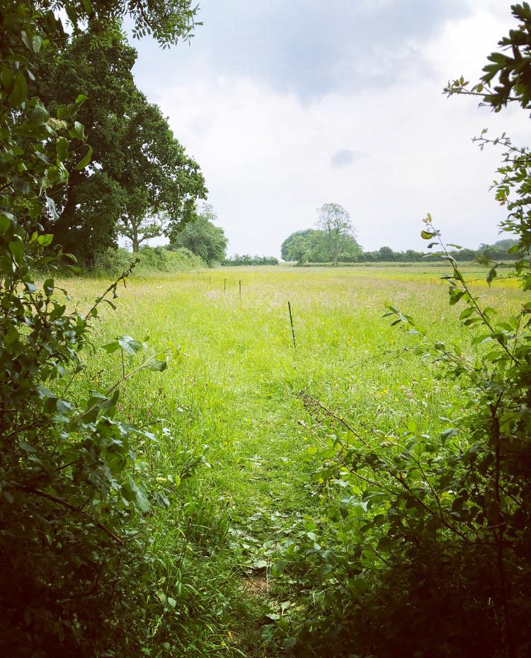 Somerset lavender, Somerset cool, Somerset blog, Somerset bloggers, Somerset blogger, Somerset lifestyle blog