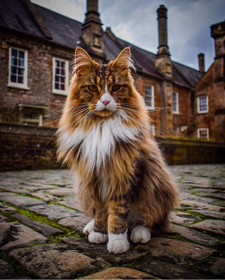 Resident Tiger at Vicars Close in Wells, Vicars Close Wells, Zoe Cox, Somerset photography, Pic sure Somerset, Somerset blog, Somerset cool