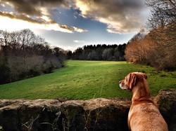 Bella in Somerset