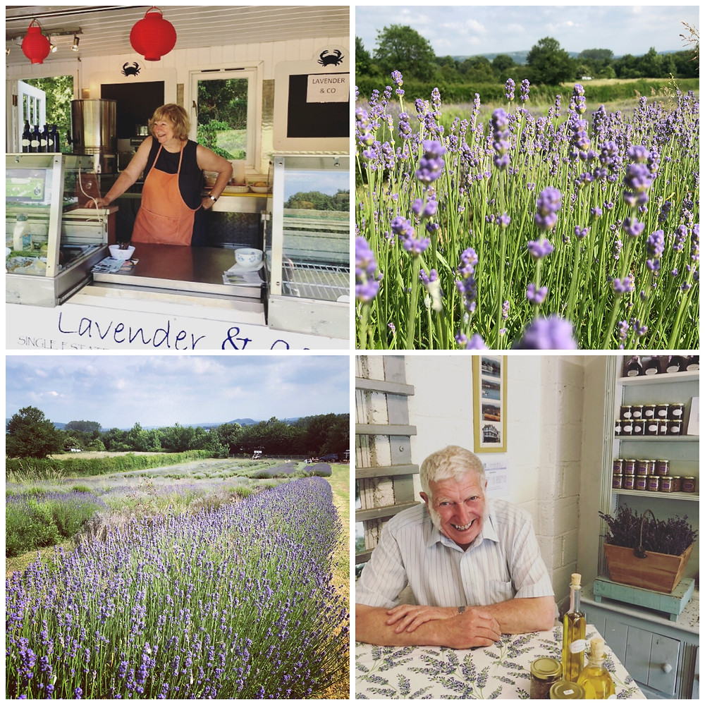 Lavender & co, Somerset cool, Somerset blog, Carol and Barry, owners of lavender & co, lavender fields in Somerset