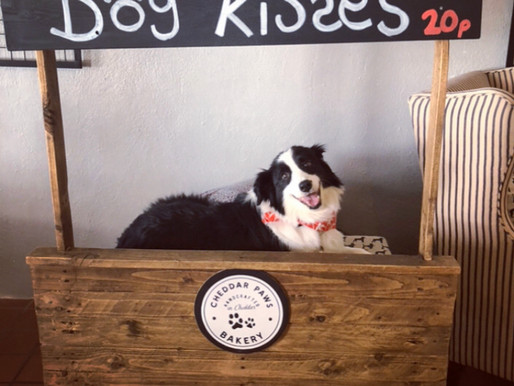Cheddar Paws Bakery - Four Thoughts
