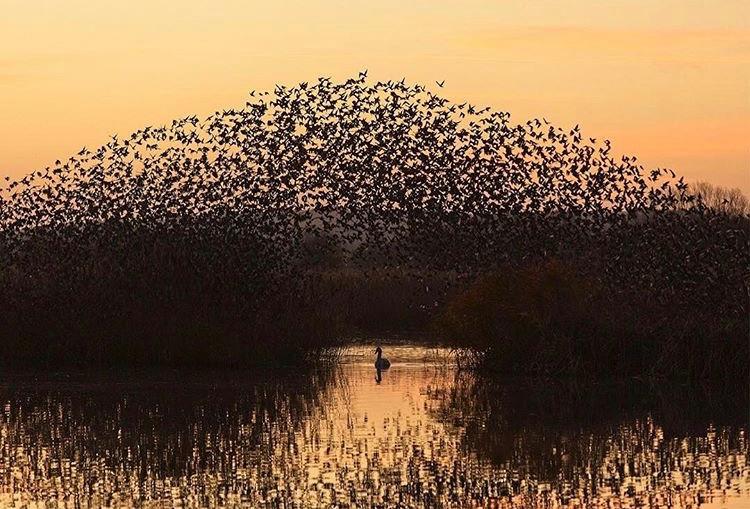 Somerset cool, Somerset blog, Starling murmurations in Somerset, Somerset blogger, starlings in Somerset
