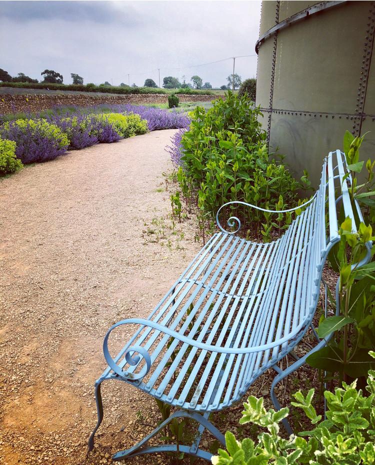 Somerset cool, Somerset lavender, lavender fields in Somerset, Somerset blogger