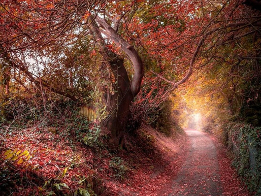 Picture Autumnal Somerset