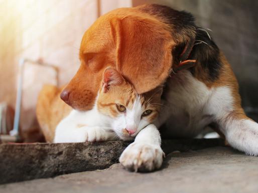Somerset & Dorset Animal Rescue - helping animals, saving lives