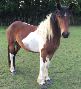 Somerset and dorset animal rescue, Somerset rescue ponies, somerset animal rescue, Somerset cool, Somerset blog, Somerset blogger, Best blog in Somerset, blogs about Somerset