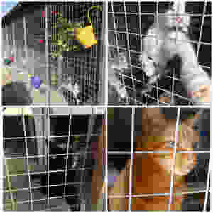Somerset and Dorset animal rescue, Somerset cool, Somerset blog, rescue cats in Somerset, Somerset blogger, blogs about somerset, rescue animals in somerset