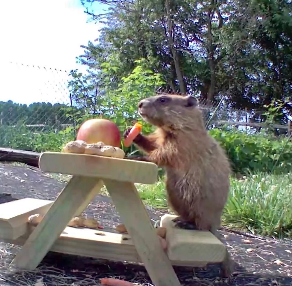Chunk the groundhog, Shake communications, Shake blog