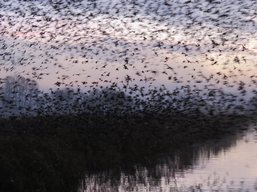 Jackie Curtis, Somerset starling murmurations, Somerset cool, best somerset blog
