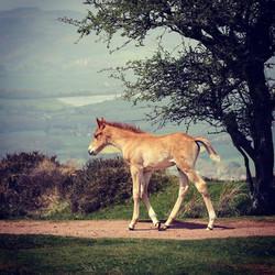 Pony at Bicknoller Post