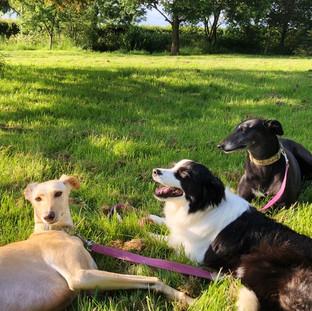 The three muskerhounds