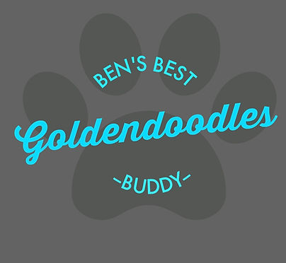 about goldendoodles