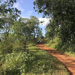 Walking Forest Limu.JPG