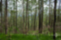 natureza-7.jpg
