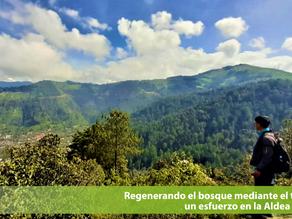 Regenerando el bosque mediante el turismo:un esfuerzo en la Aldea Paxtocá