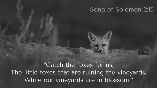 Watch Out For The Little Foxes