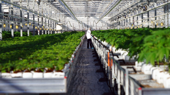 """A """"High"""" Time for Commercial Real Estate: A Look at the Cannabis Act from a Real Estate Pe"""
