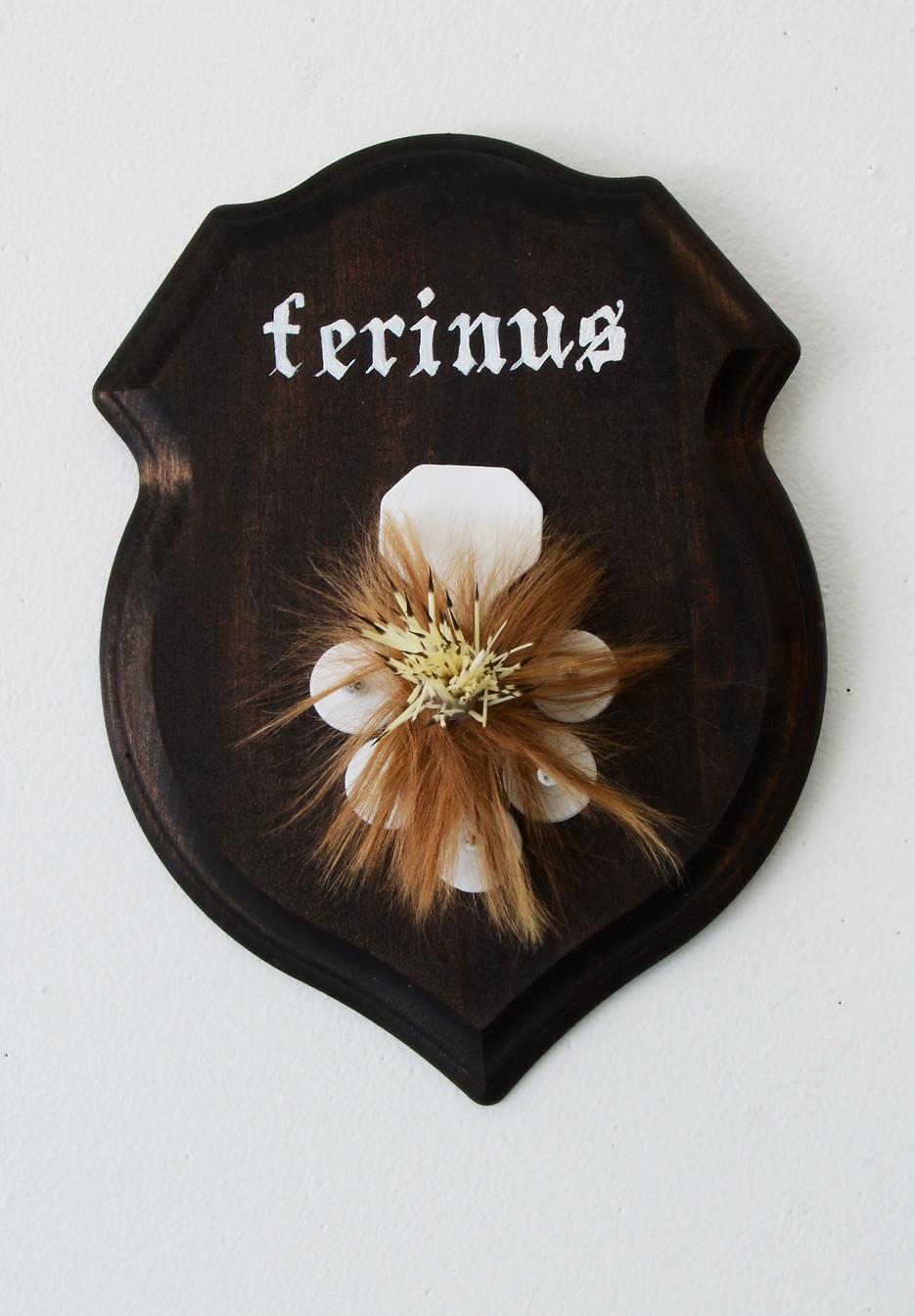Ferinus