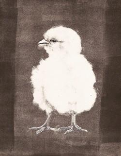 8 Anna Brewer, Chick, Monotype
