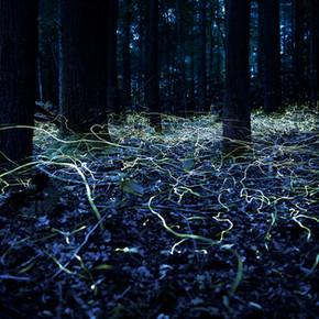 Magical Fireflies of the Blue Ridge Mountains