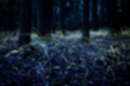 Blue Ghost Fireflies, Spencer Black