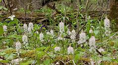 foamflowers.JPG